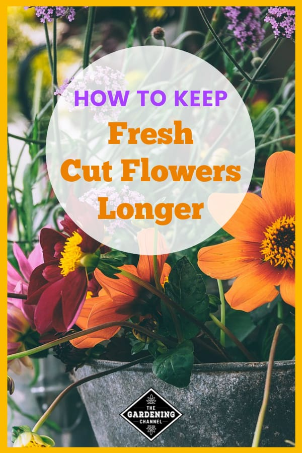 fresh flowers with text overlay how to keep fresh cut flowers longer