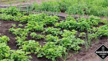 Vegetable Garden Layout Tips
