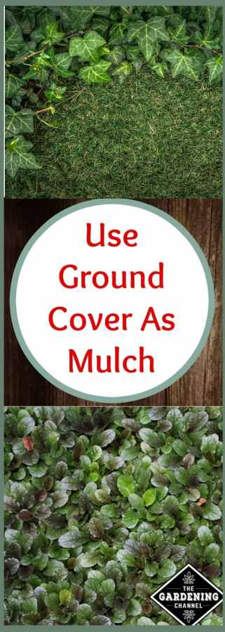 Mulch as ground cover