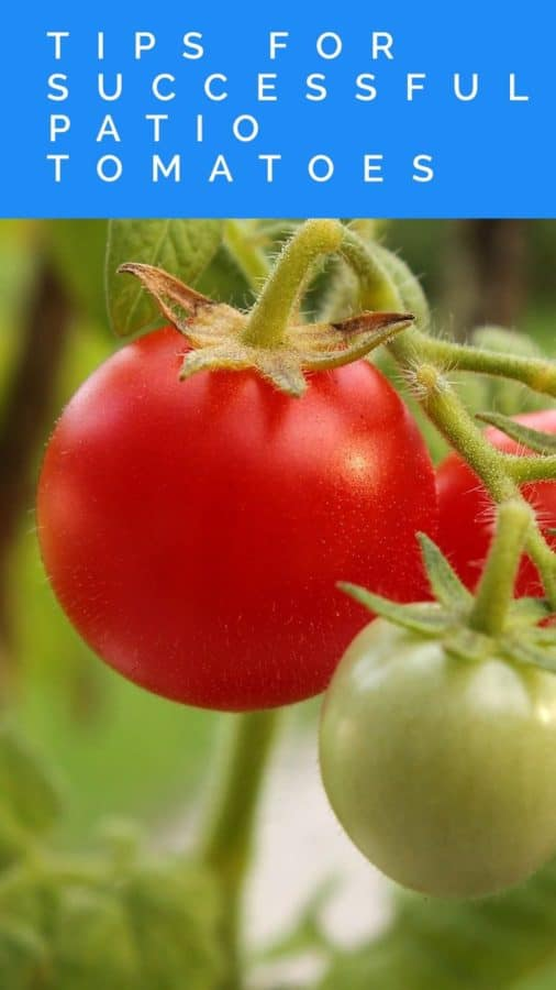 You can grow tomatoes on your patio. Here's how.