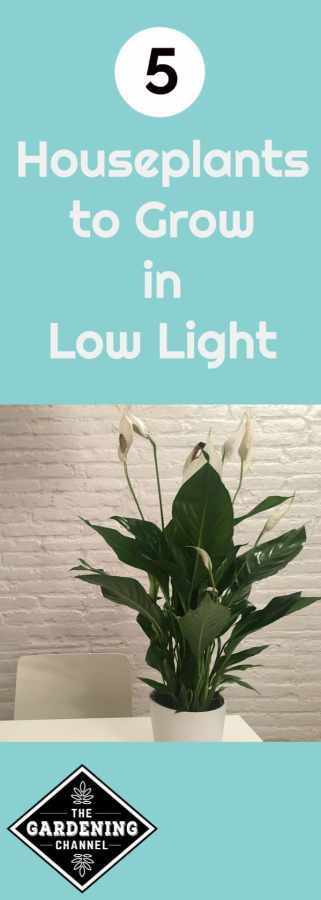 houseplants that grow in low light