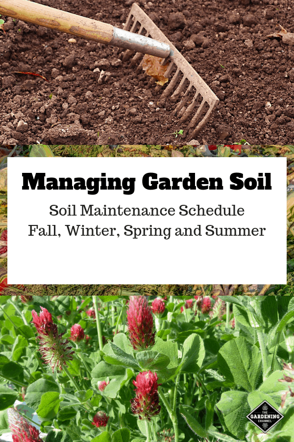 raking soil compost crimson cover crop with text overlay managing garden soil soil maintenance schedule fall winter spring and summer