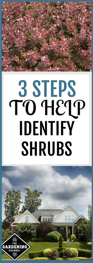 How to identify shrubs
