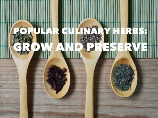 Popular Culinary Herbs to Grow for Cooking