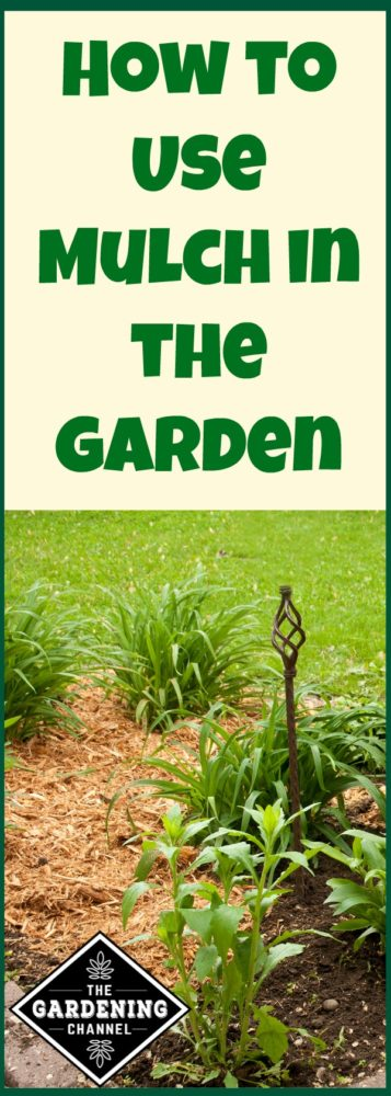 How to use mulch in your garden and why it's good for your plants.