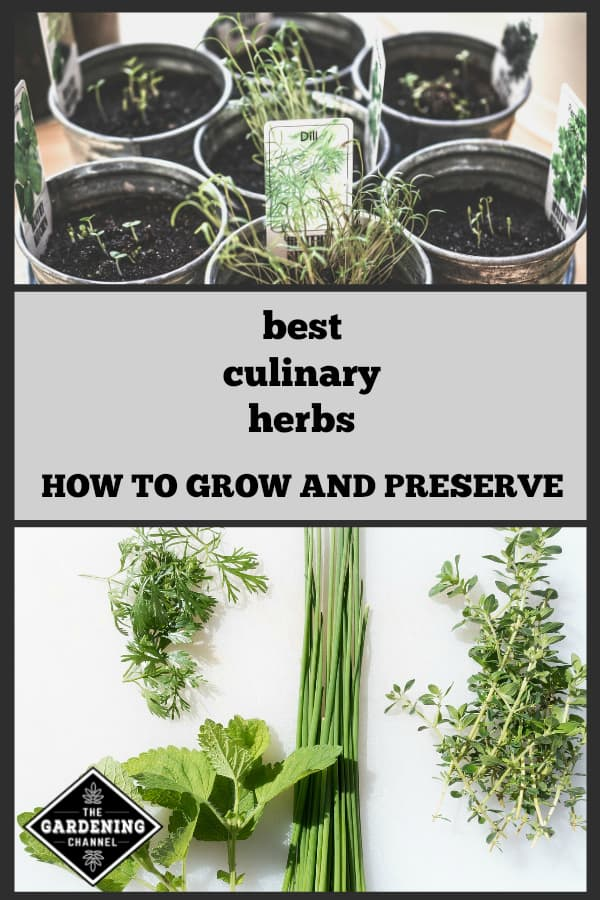 metal containers growing indoor kitchen herbs and closeup of harvested herbs from garden with text overlay best culinary herbs how to grow and preserve