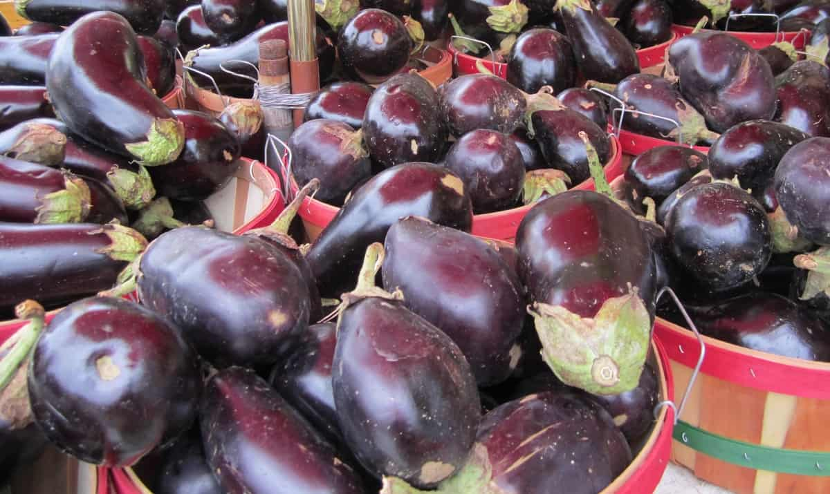Growing Eggplants from Seedlings to Harvest