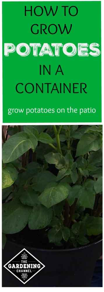 How To Grow Potatoes In A Container Gardening Channel