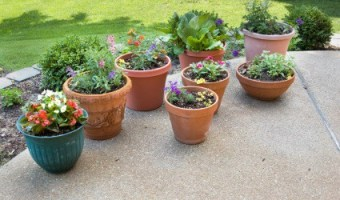 An Overview of Container Gardening