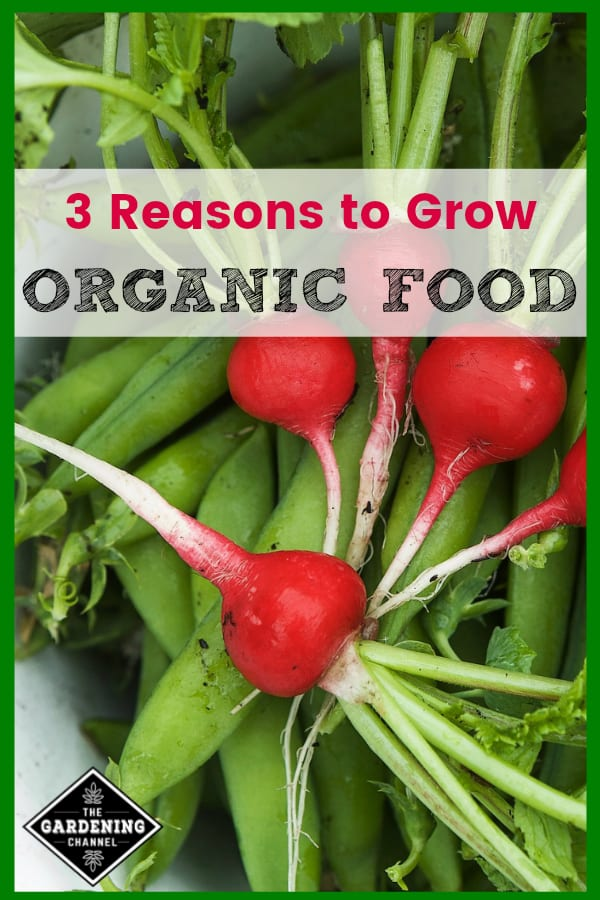 close up of organic radish peas and greens with text overlay three reasons to grow organic food