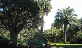 California Botanical Gardens