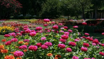 Gardening In Dallas Fort Worth Arlington And North Texas