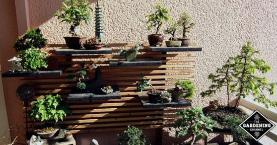 Tips for Caring for Bonsai Trees