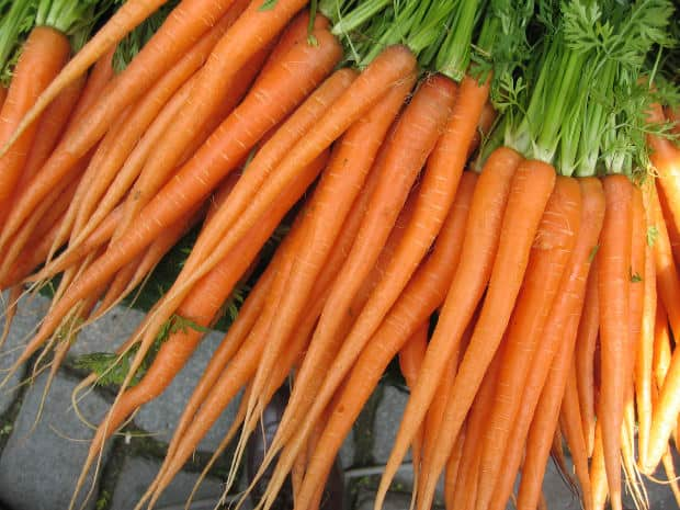 How To Grow Carrots In The Home Garden Gardening Channel