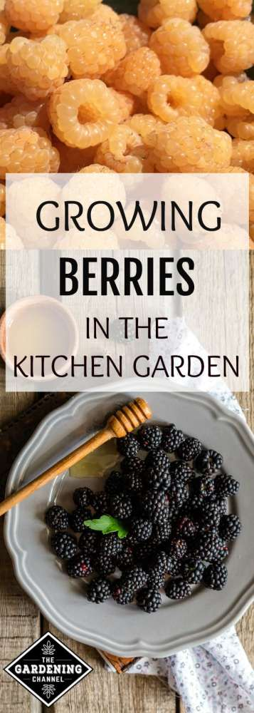 gardening guide to growing berries in the kitchen garden