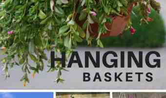 How to Garden with Hanging Baskets