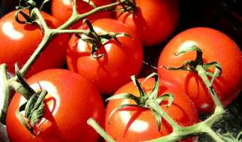 Tomato Terminology Made Easy