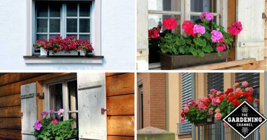 window box plants for shade