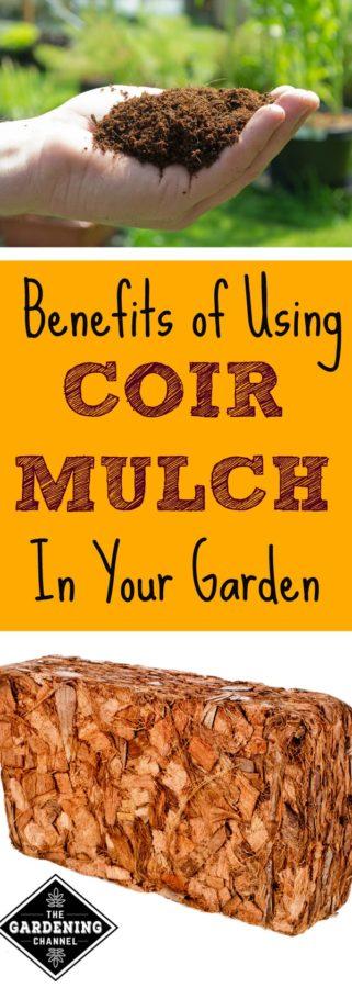 Using Coir Mulch