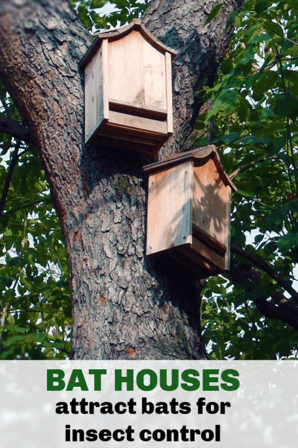 bat house in tree with text overlay bat houses attract bats for insect control