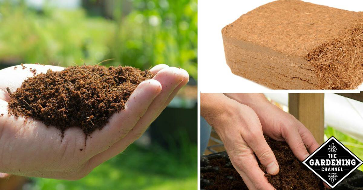 The Many Benefits Of Coir Mulch Gardening Channel