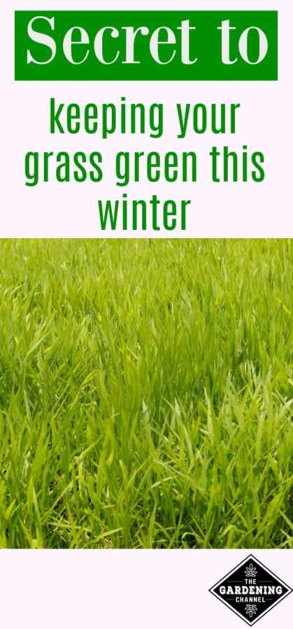 Secret to keeping grass green