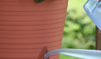 Using Self Watering Planters
