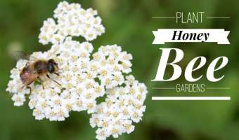 honey bee gardens growing