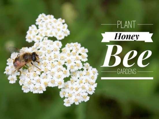 honey bee gardens growing