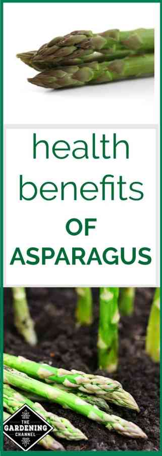 The Health Benefits Of Asparagus Gardening Channel