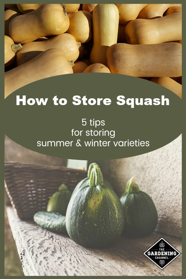 butternut and Tondo Scuro Di Piacenza Squash with text overlay how to store squash 5 tips for storing summer and winter varieties