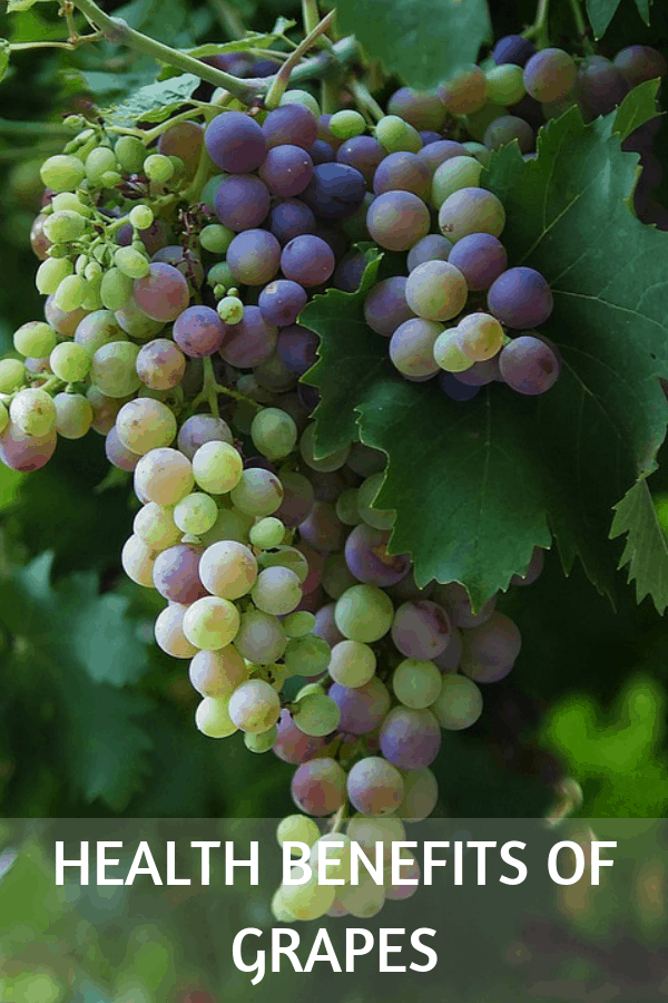 grapes growing on vine with text overlay health benefits of grapes