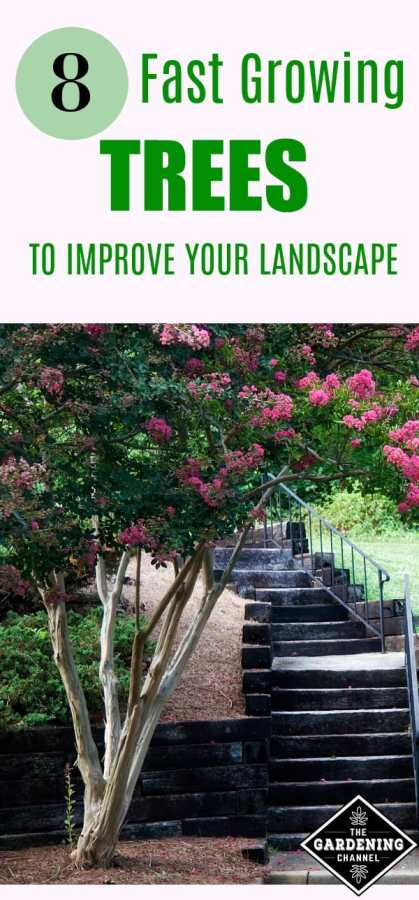 fast growing trees to improve your landscape
