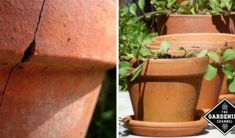 Caring for Terracotta Pots