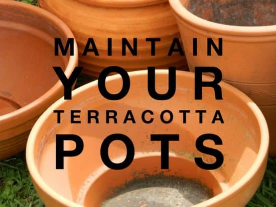 maintain clay pots