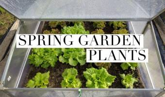 growing spring garden plants