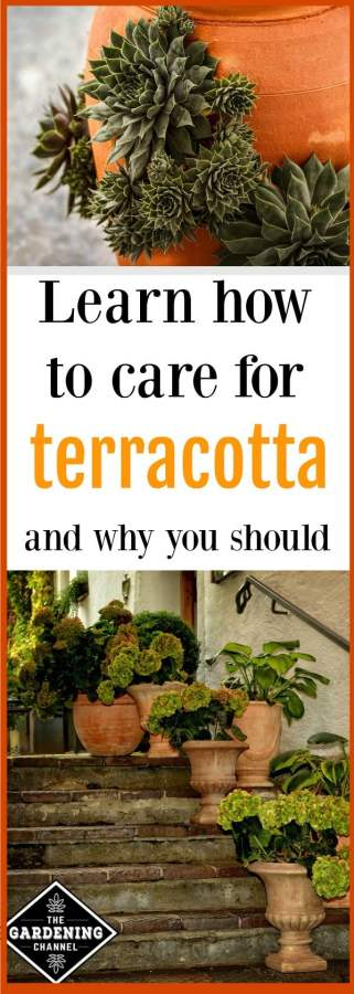 how to maintain terracotta