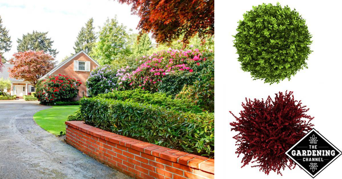 How To Choose Landscaping Shrubs Gardening Channel