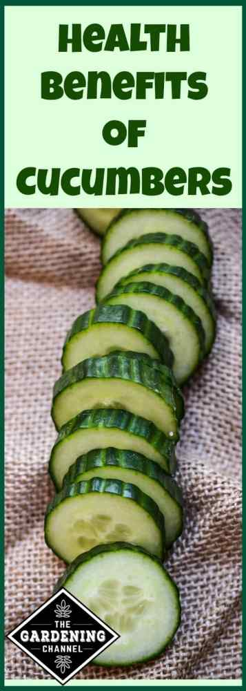 cucumbers have many health benefits. Try growing them so you can taste how amazing fresh cucumbers taste.