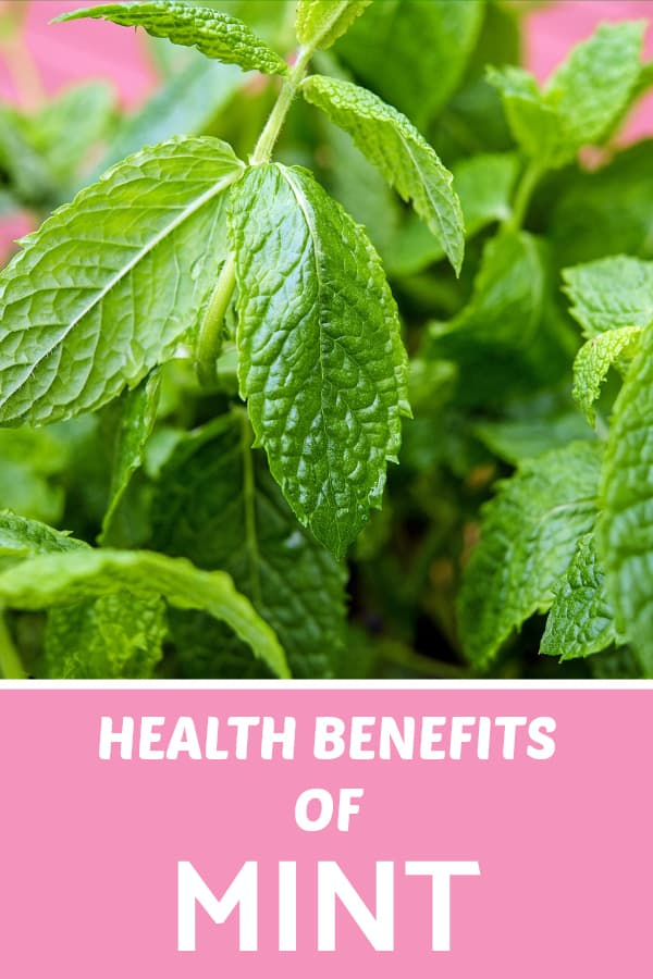 mint close up with text overlay health benefits of mint