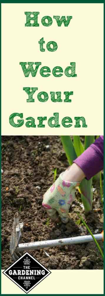 There are many strategies to keeping your garden weed free. Learn how to keep weeds from taking over your garden.