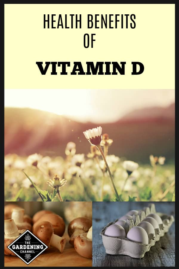 sun on daisies mushrooms eggs with text overlay health benefits of vitamin d