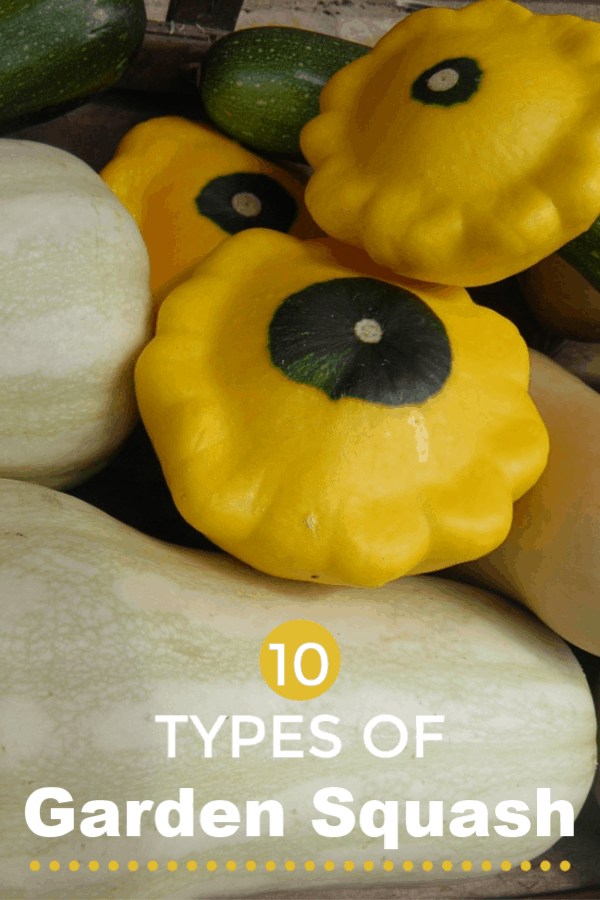squash varieties from garden with text overlay 10 types of garden squash
