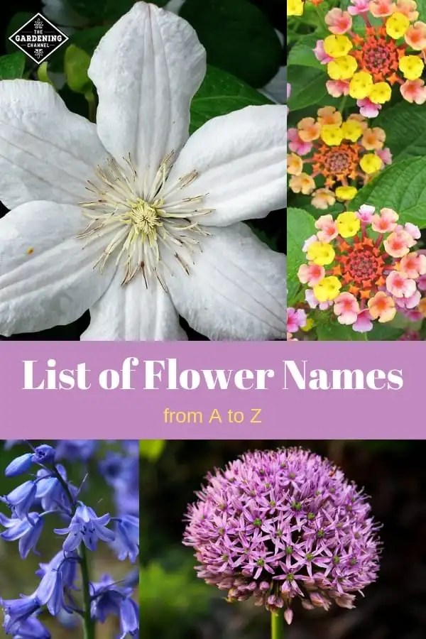 List Of Flower Names From A To Z Gardening Channel