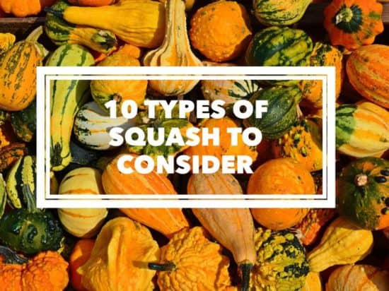 10 types of squash to grow