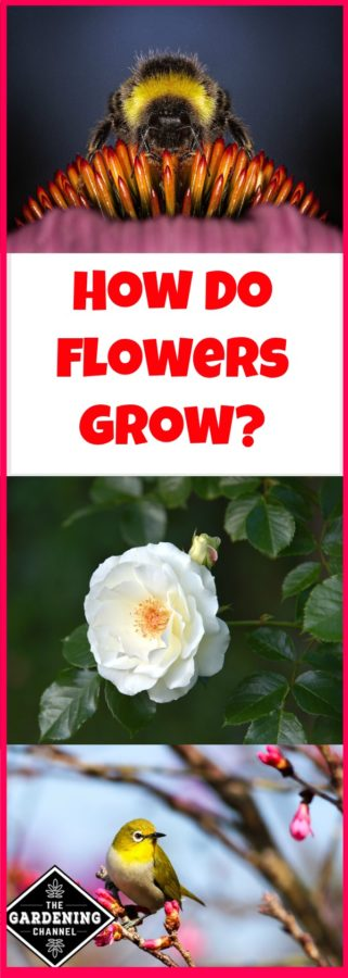 How do flowers grow
