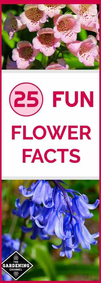 flower facts