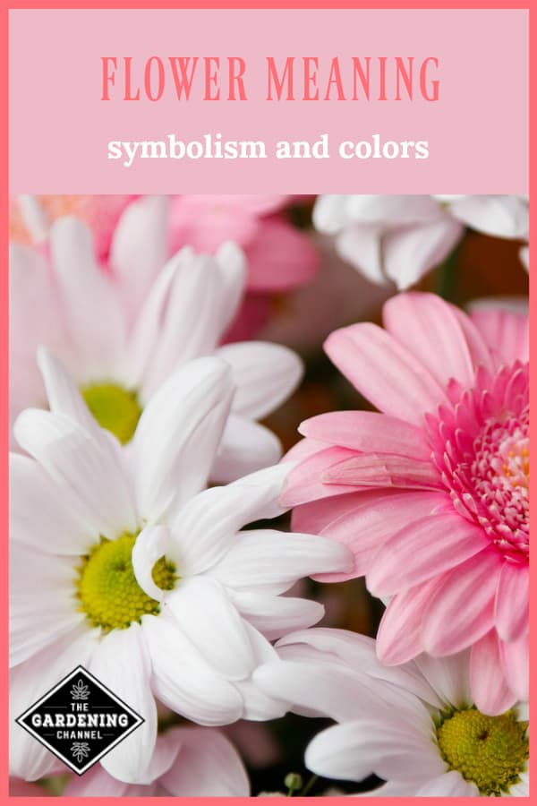 flowers with text overlay flower meaning symbolism and colors