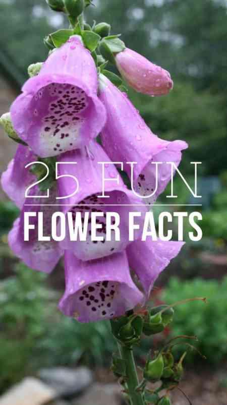 Fun Flower Facts