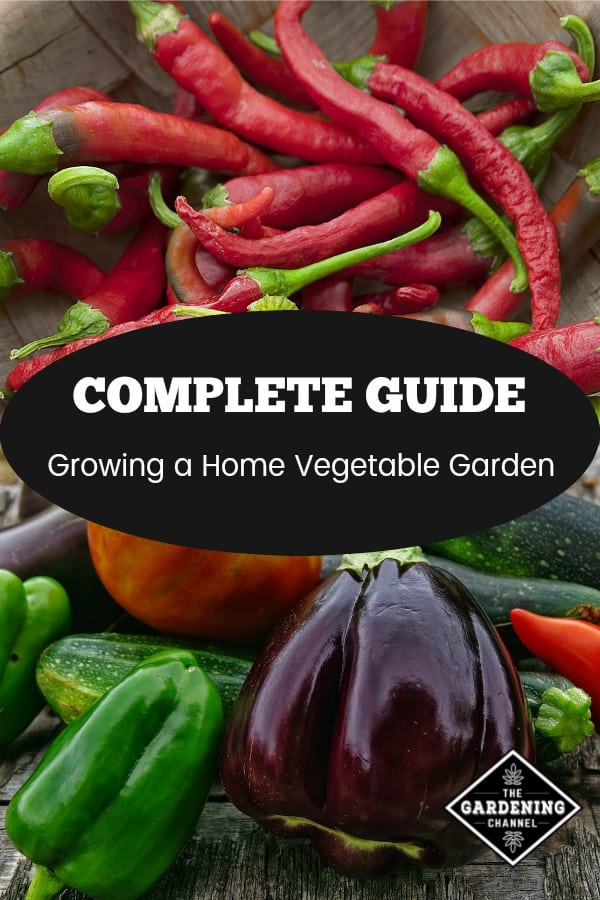 chili peppers and vegetable garden harvest with text overlay complete guide growing a home vegetable garden